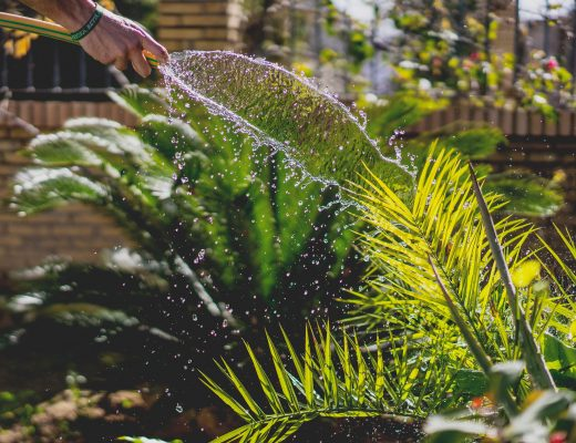 someone watering plants in a garden