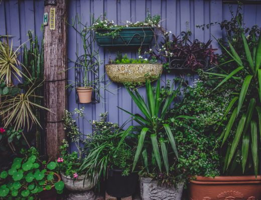 a purple garden fence with lots of green plants in pots in front of it